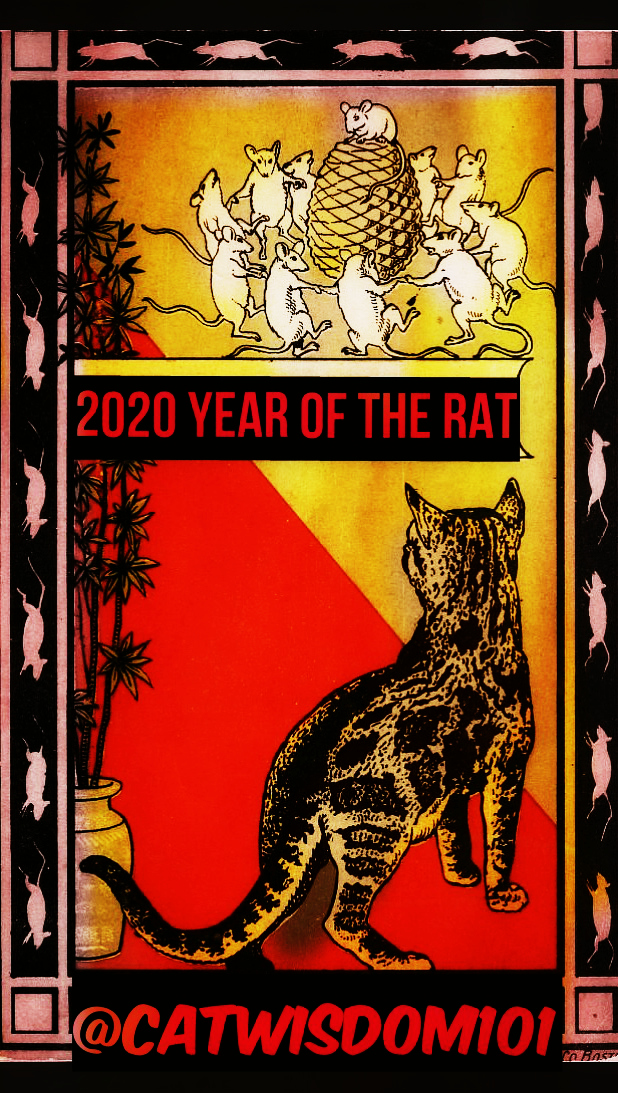 chinese year of rat with cat