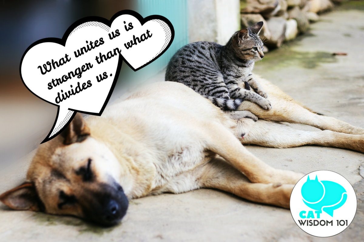 cat and dog love unity quote