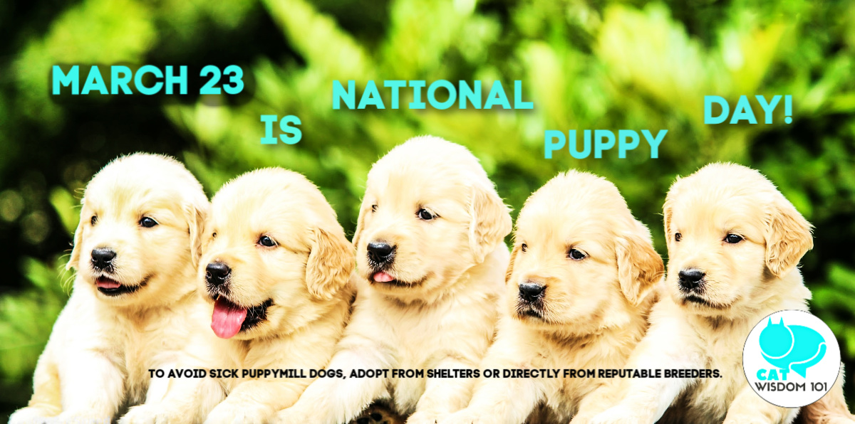 5 cute puppies national puppy day