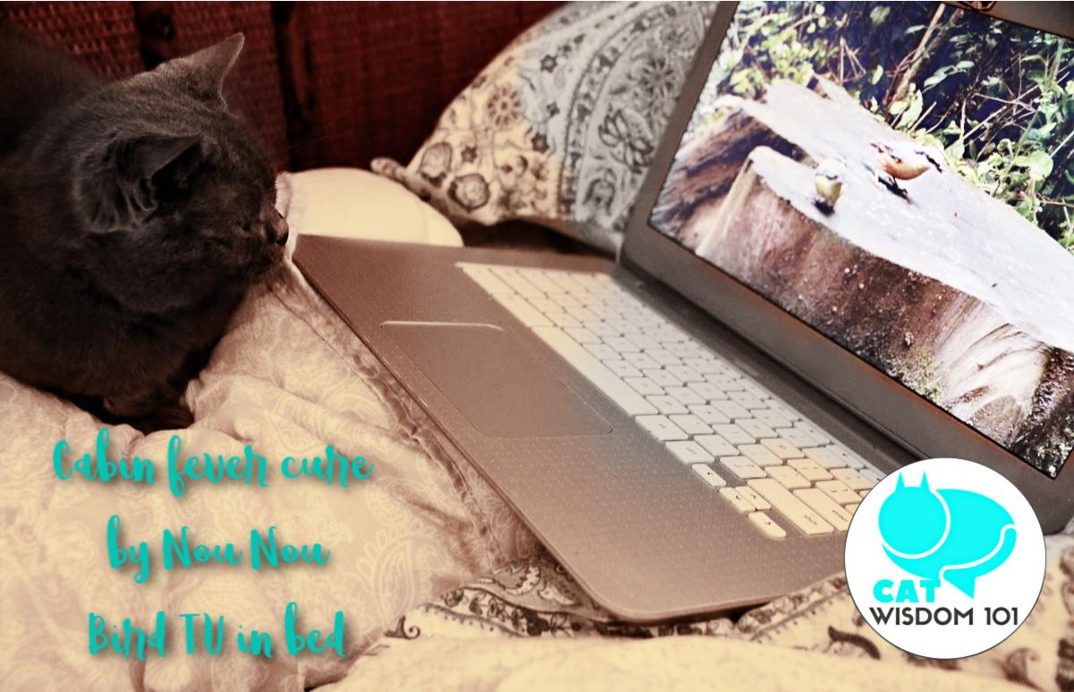 cat watching bird tv on computer in bed