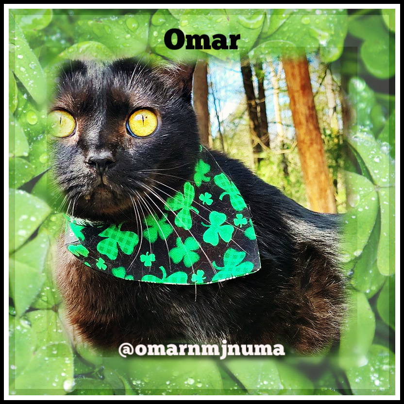 Omar black cat st. patrick's day