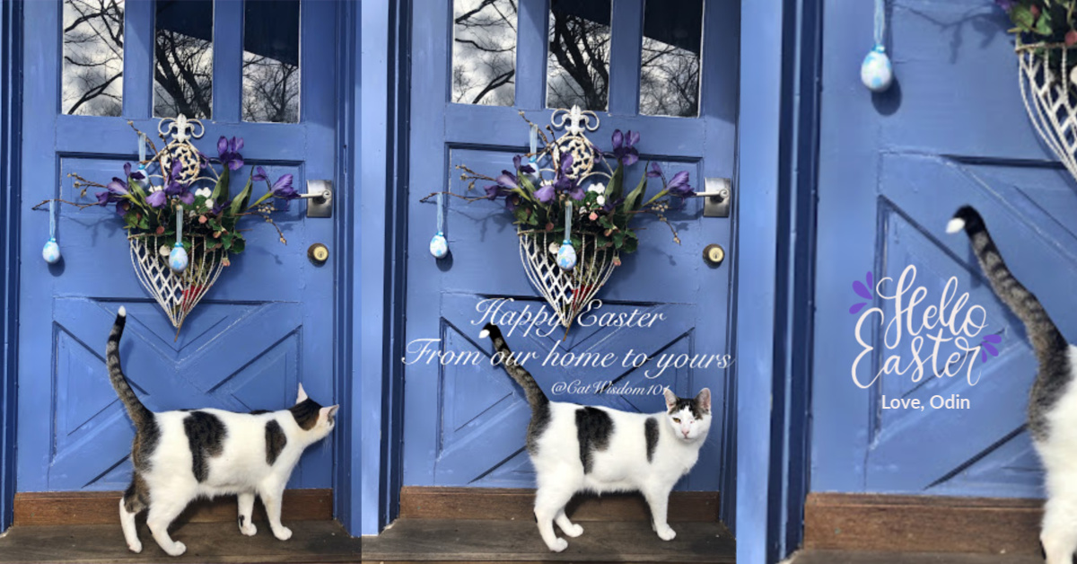 Easter Cat at door