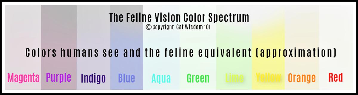 feline vision color spectrum VS human
