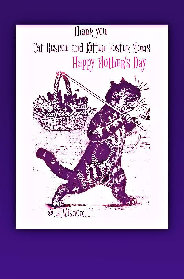 cat rescue-cat mom day
