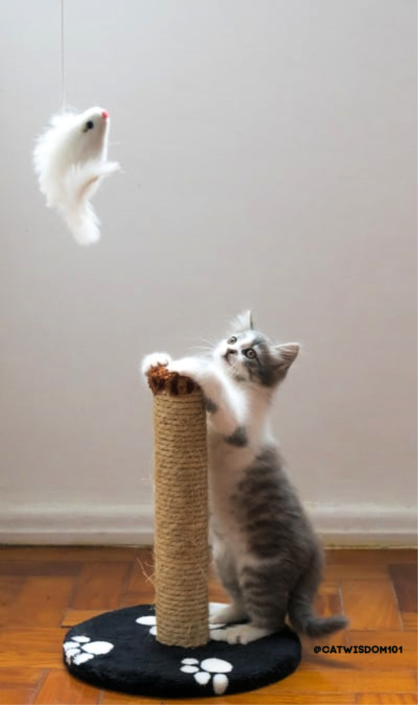 kitten with toy and scratching post