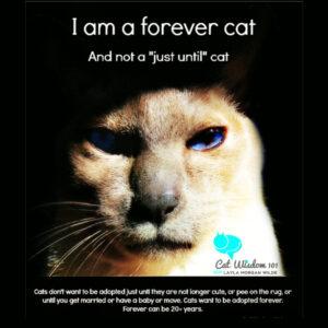 forever cat adoption catwisdom101