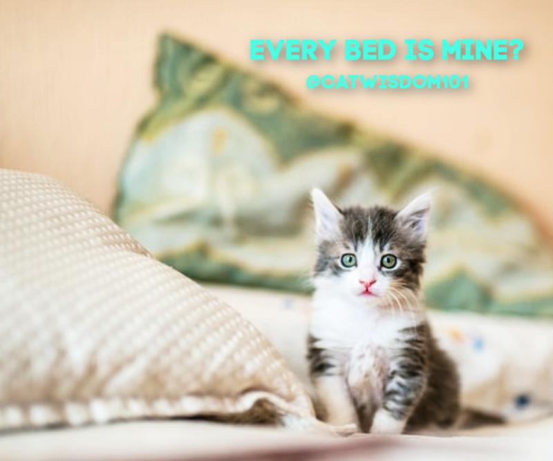 kitten in cozy bed