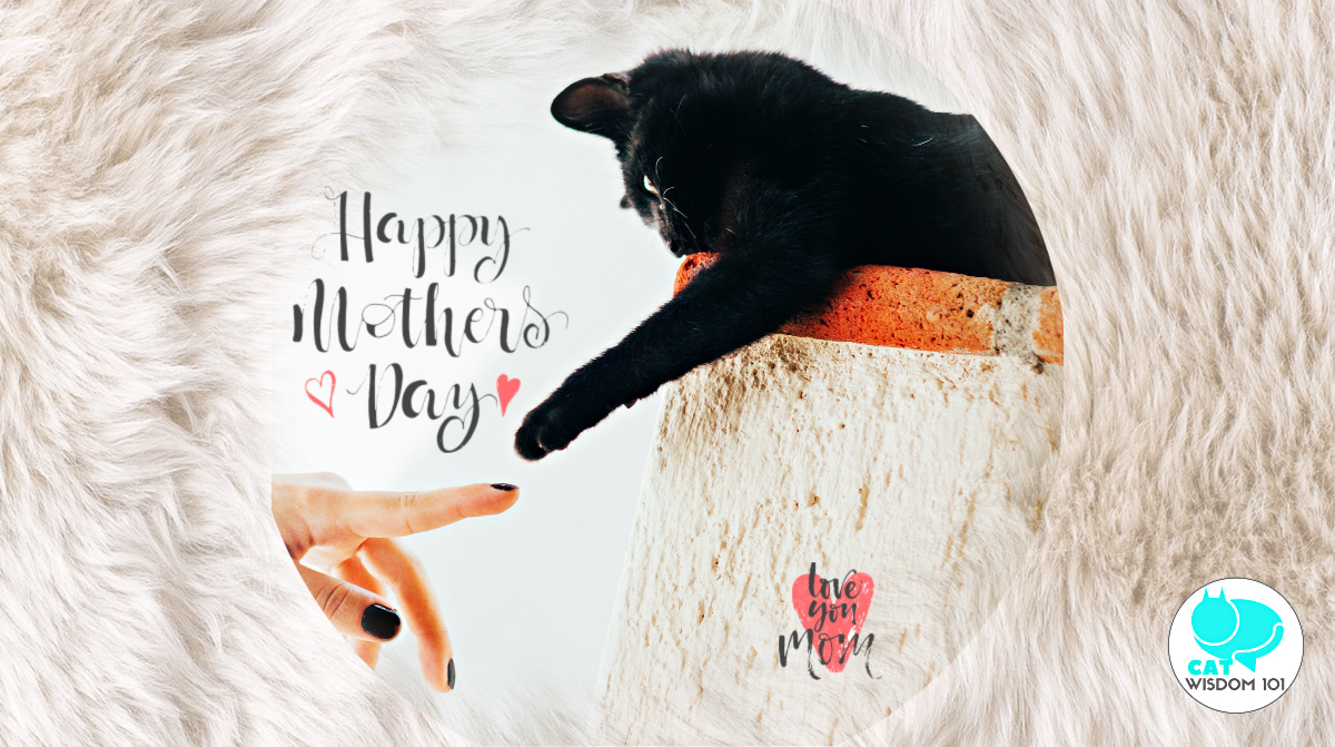 mother's day-black cat