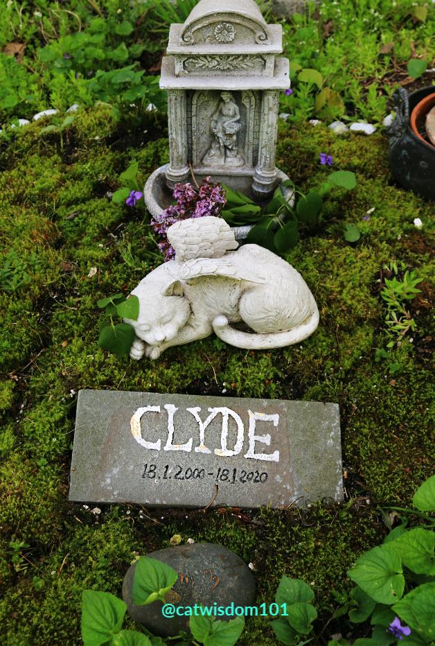 cat grave-angel cat Clyde