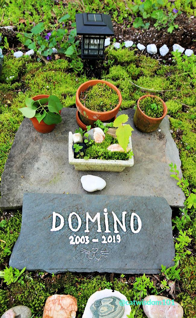 domino cat grave marker burial