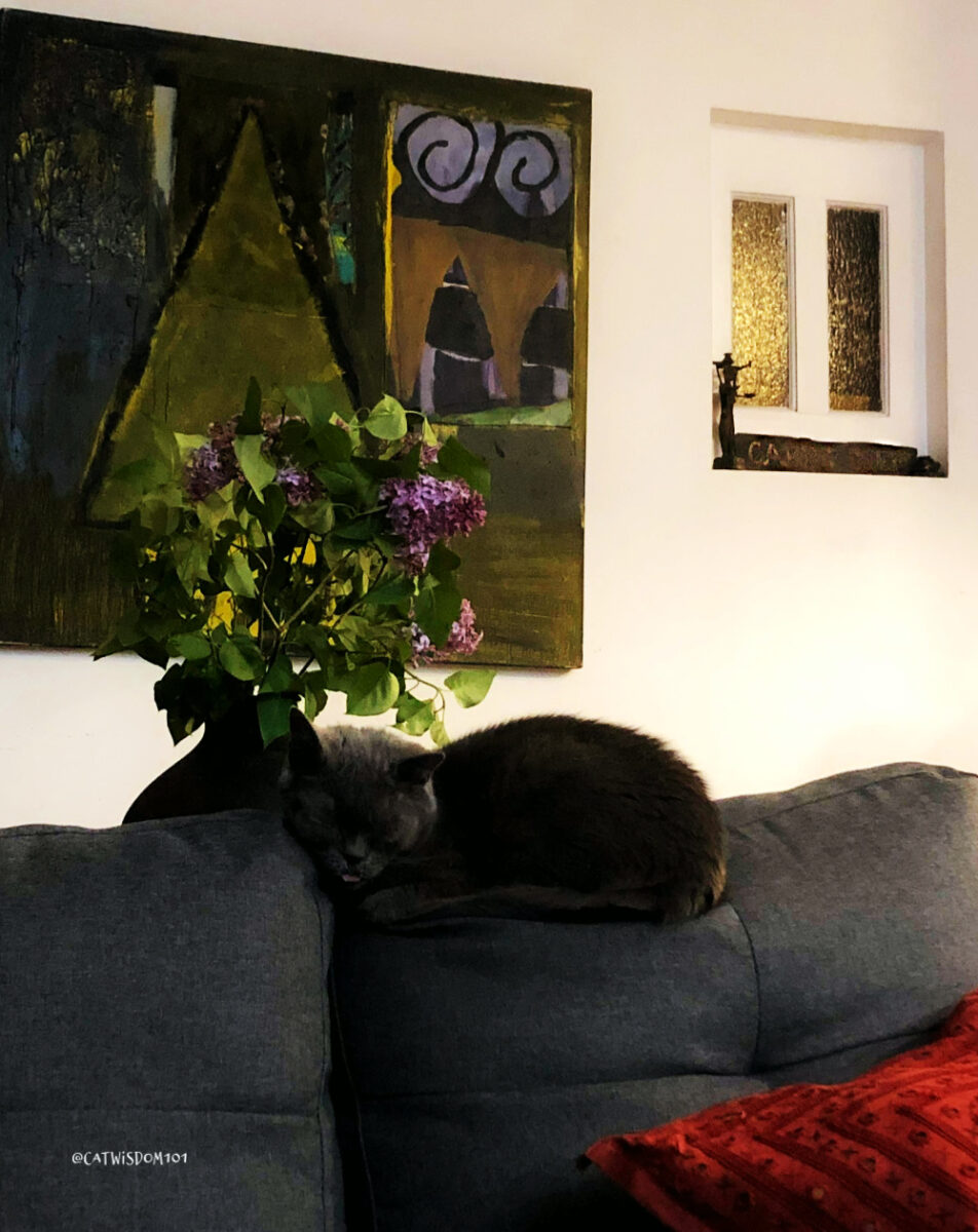 nuestro gato dormido con flores lilas