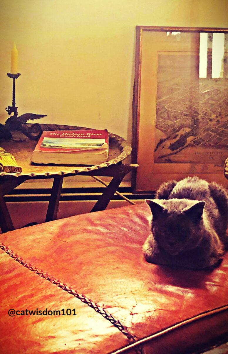 Hogaza de gato en el sofá de cuero