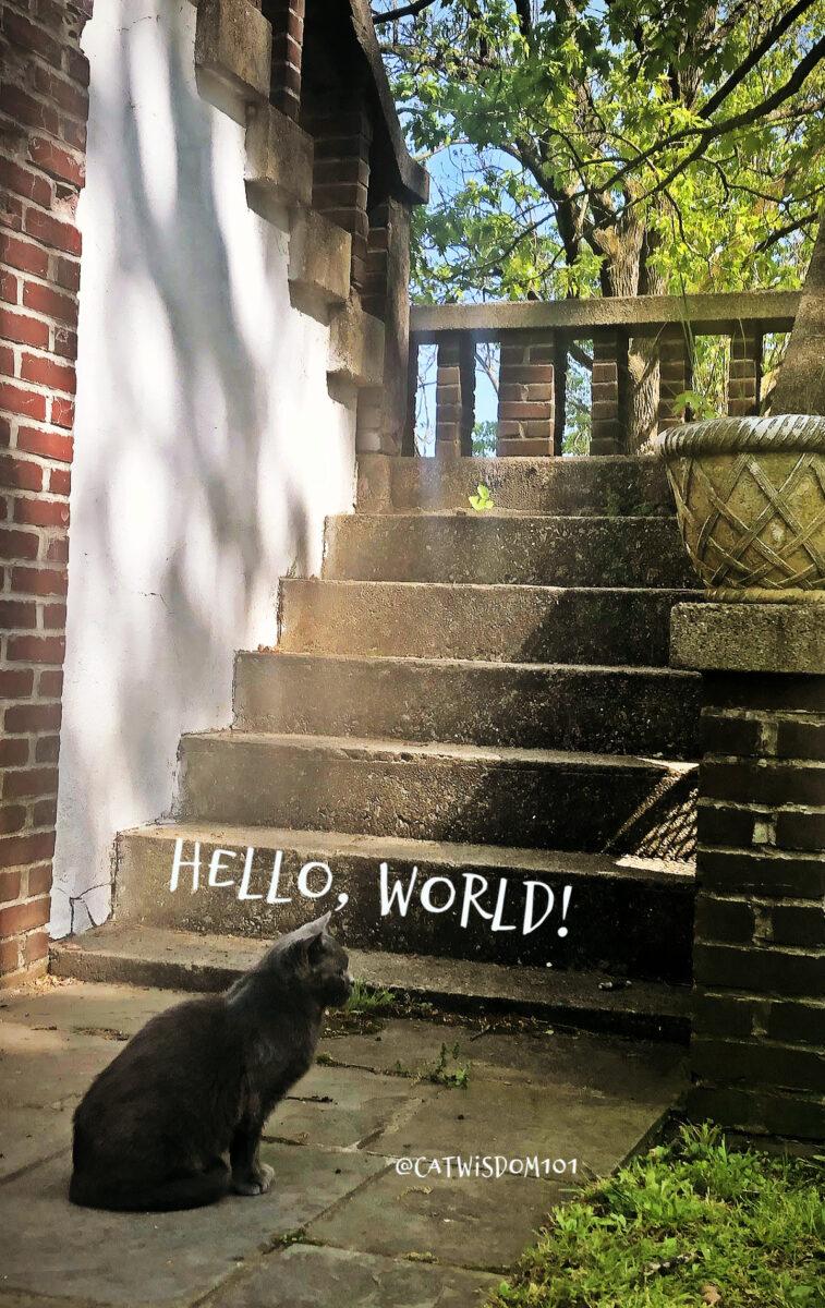 la primera vez del gato afuera