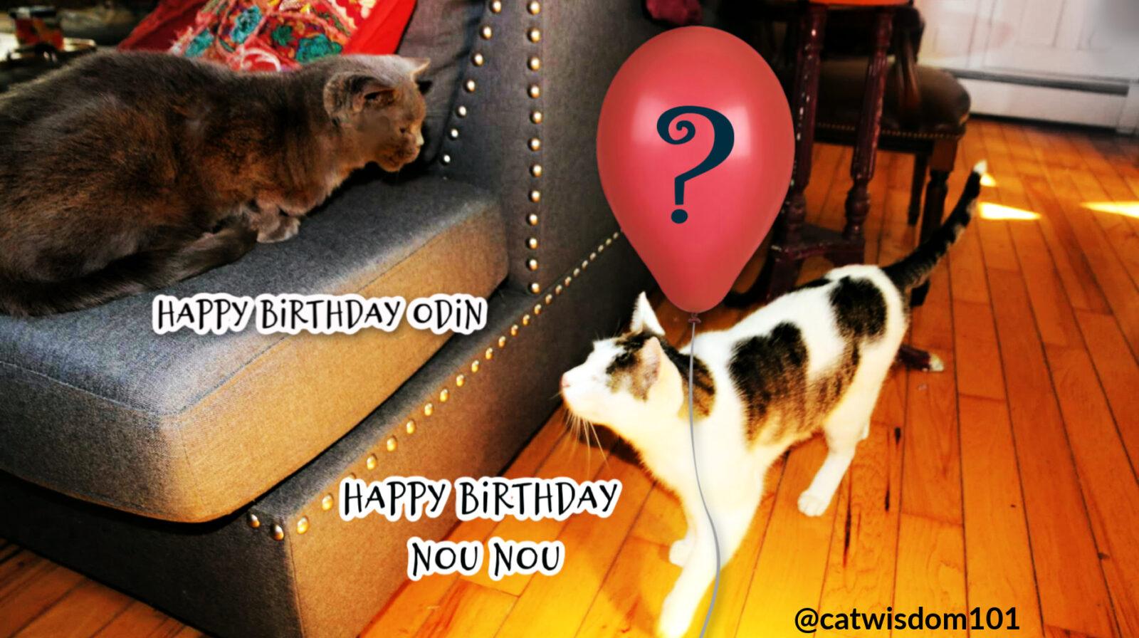 cats birthday