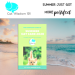 summer cat care guide 2020
