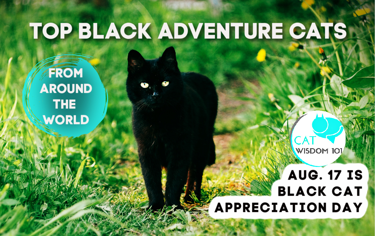 black cat appreciation day adventure cats