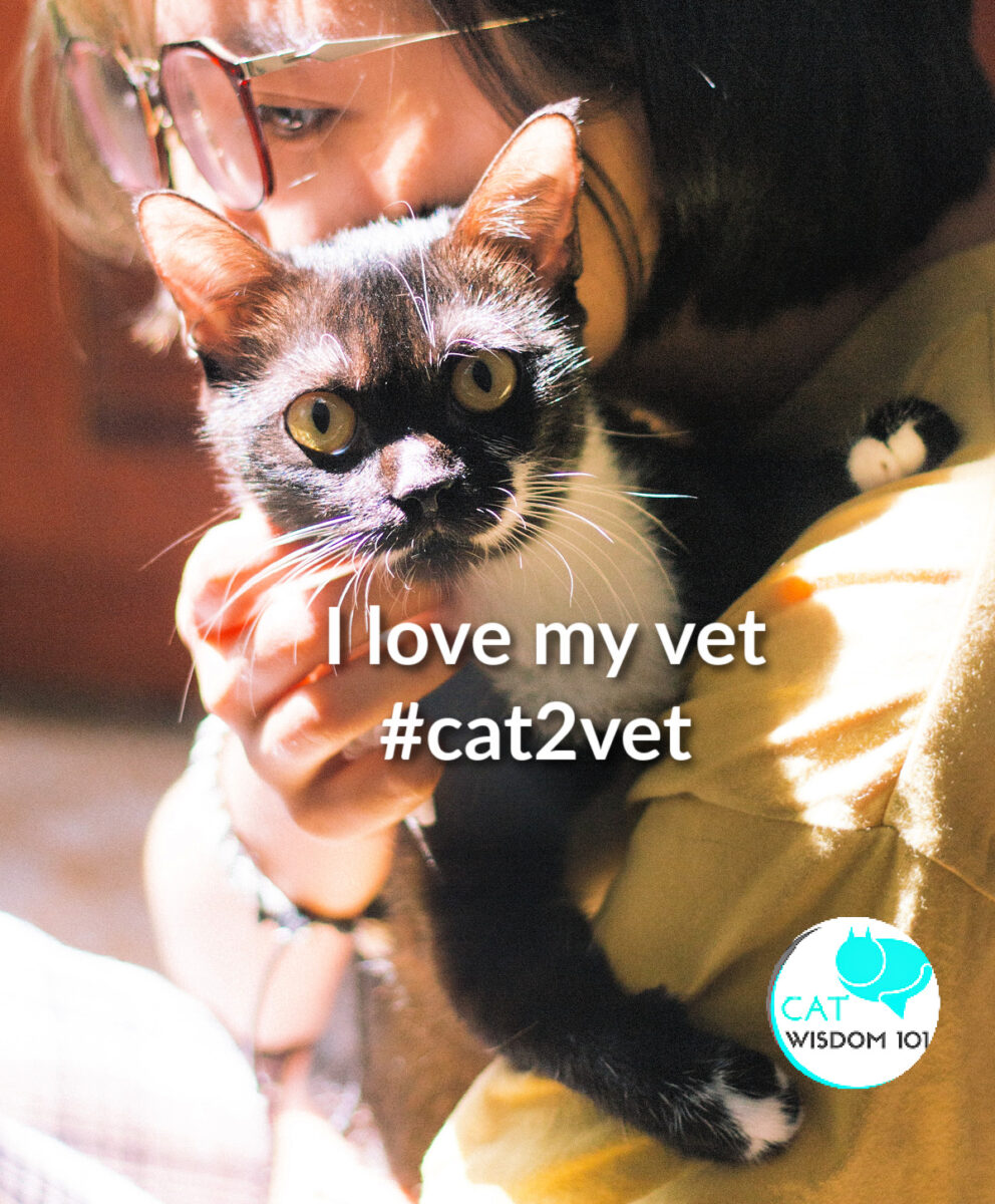 i love my vet-#cat2vet