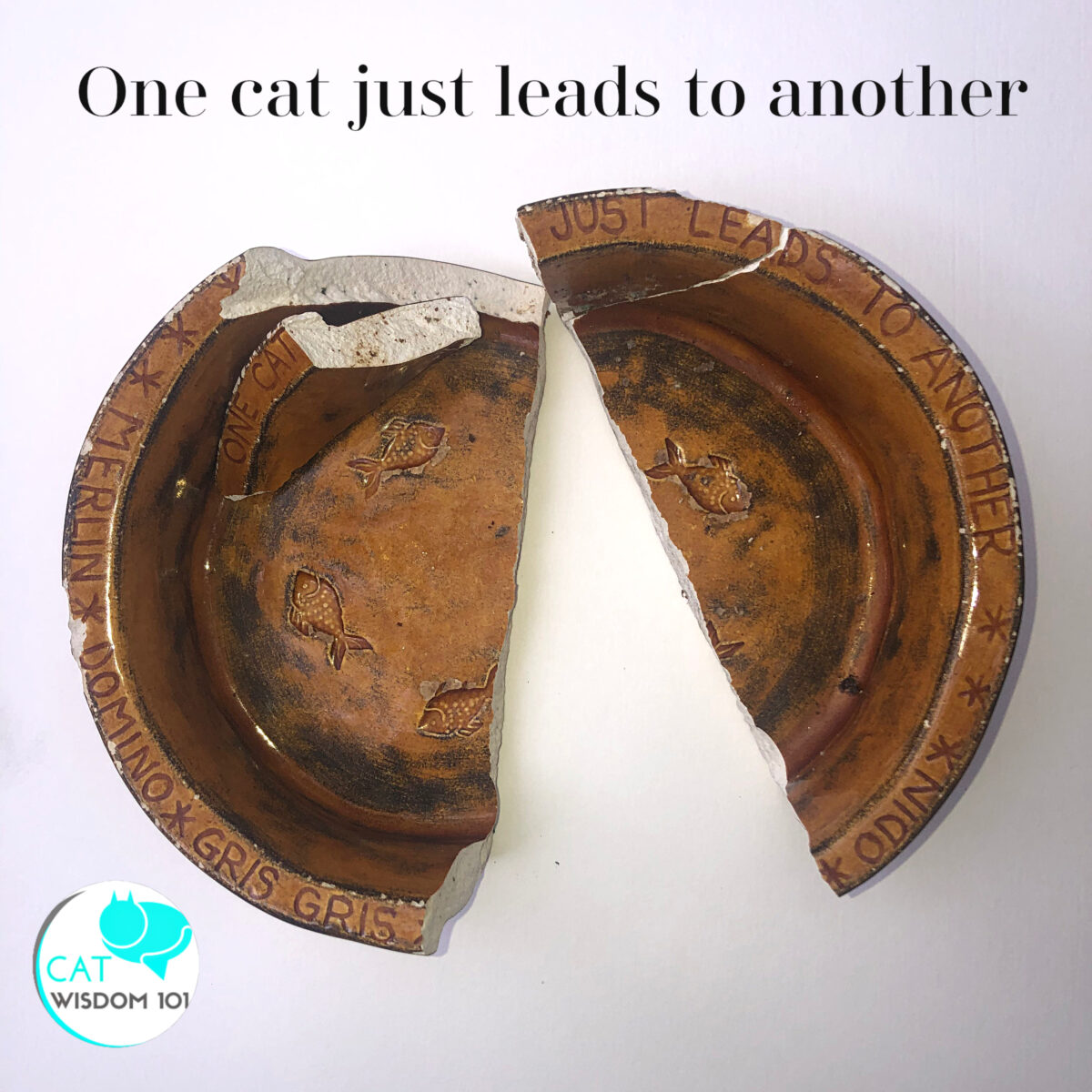 broken bowl-one cat leads to another