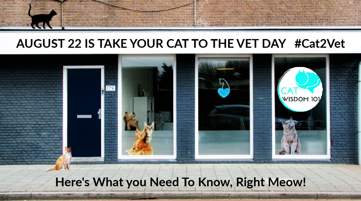 Take your cat to the vet day #cat2vet cat clinic