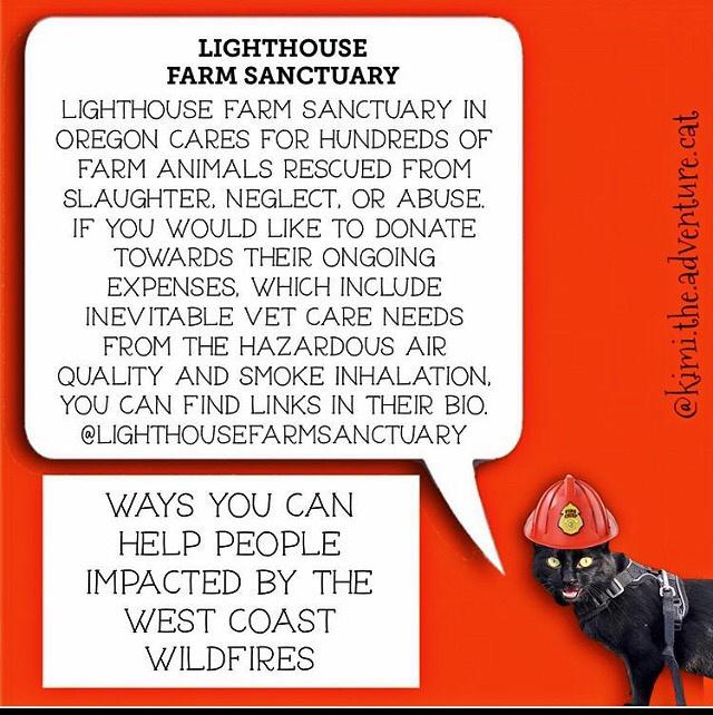 lighthousefarmsanctuary.org