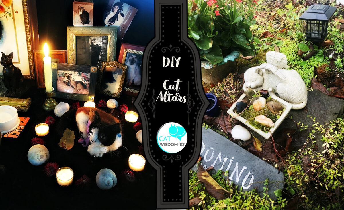 DIY Cat ancestral altar