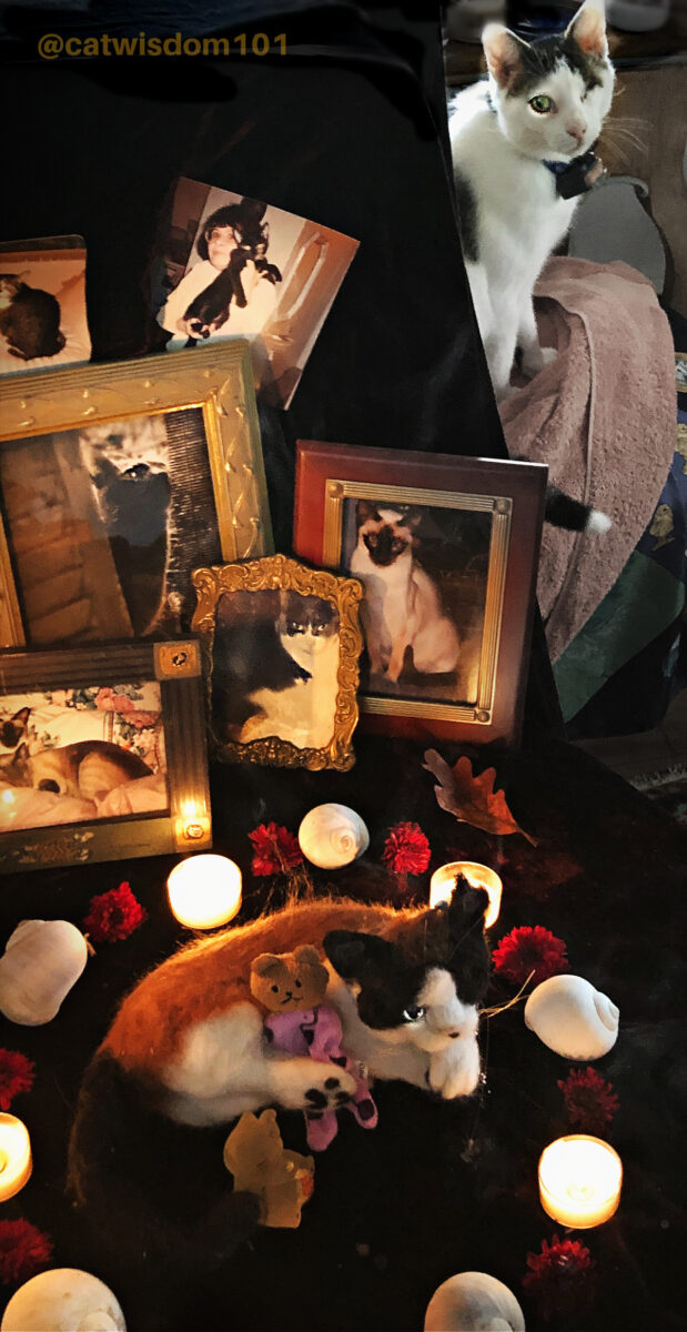 ancestral altar for cats at samhain