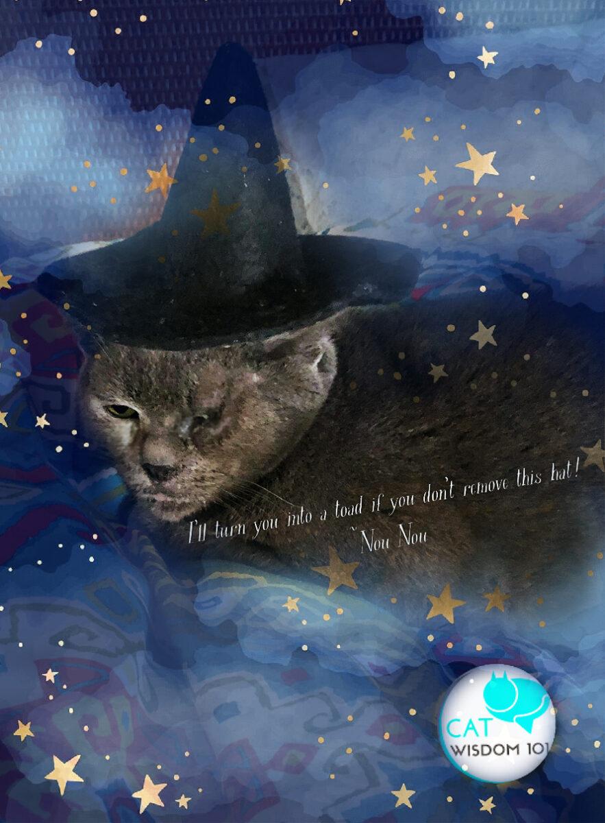 nou nou the witch cat hat
