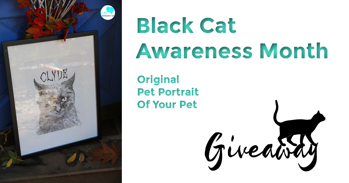 black cat awareness month giveaway