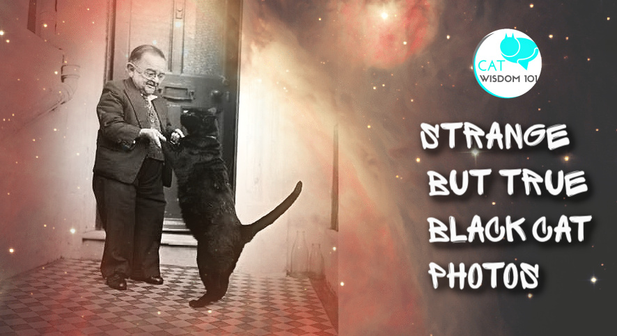 strange vintage black cat photos