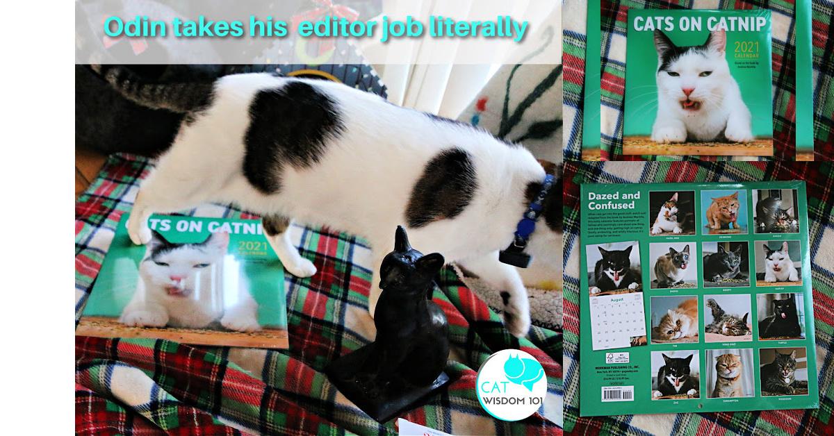 cats on catnip calendar 2021