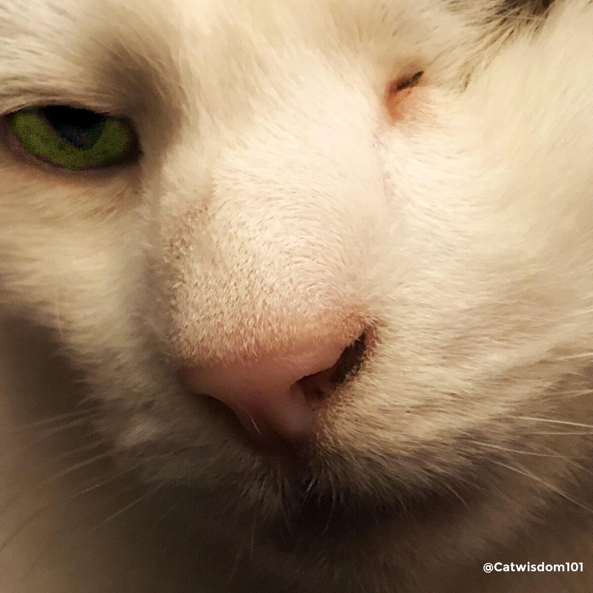 odin one-eyed cat