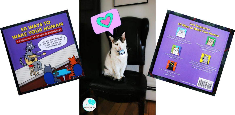 odin cat with scott metzger cartoon book