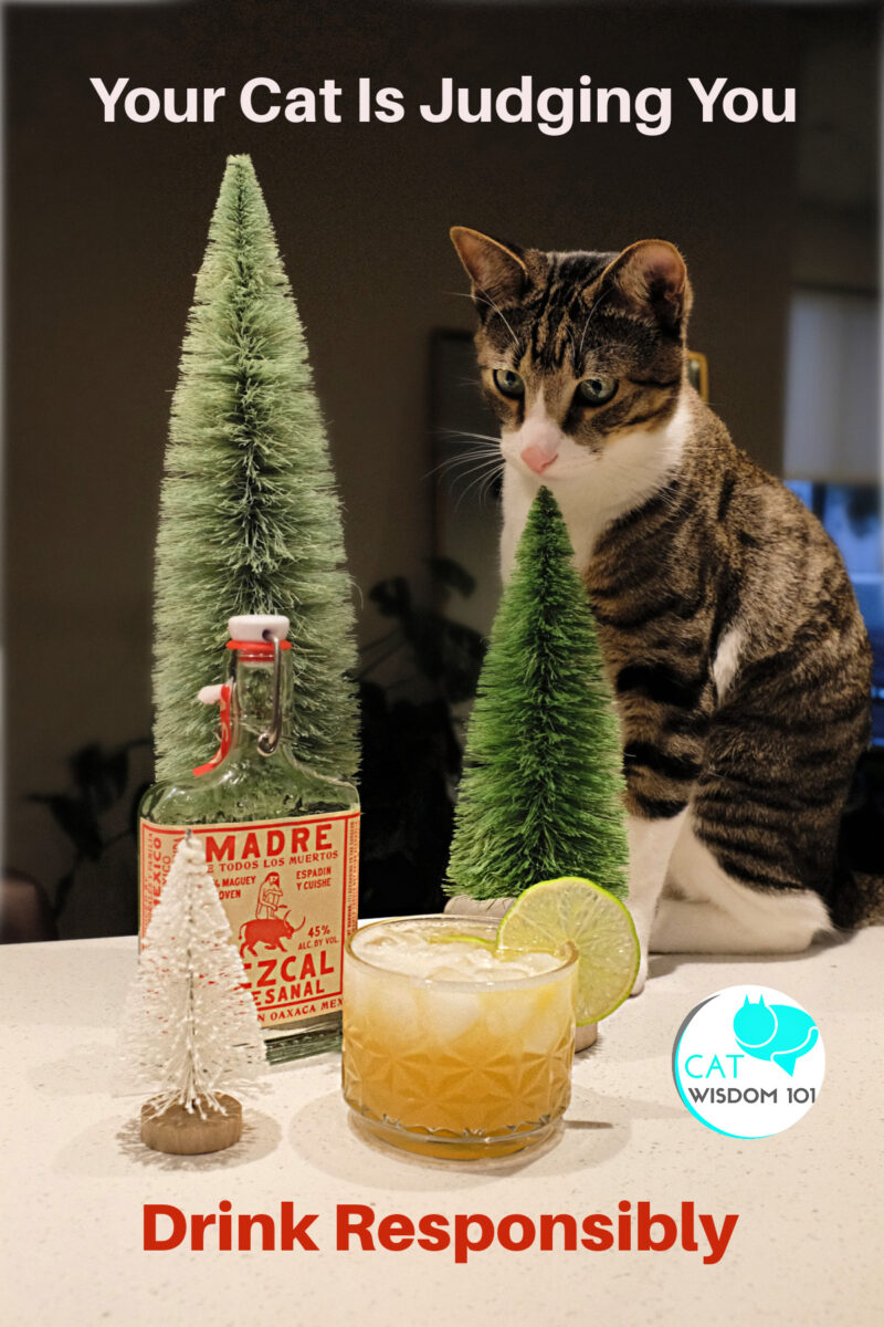 drink responsibly cat