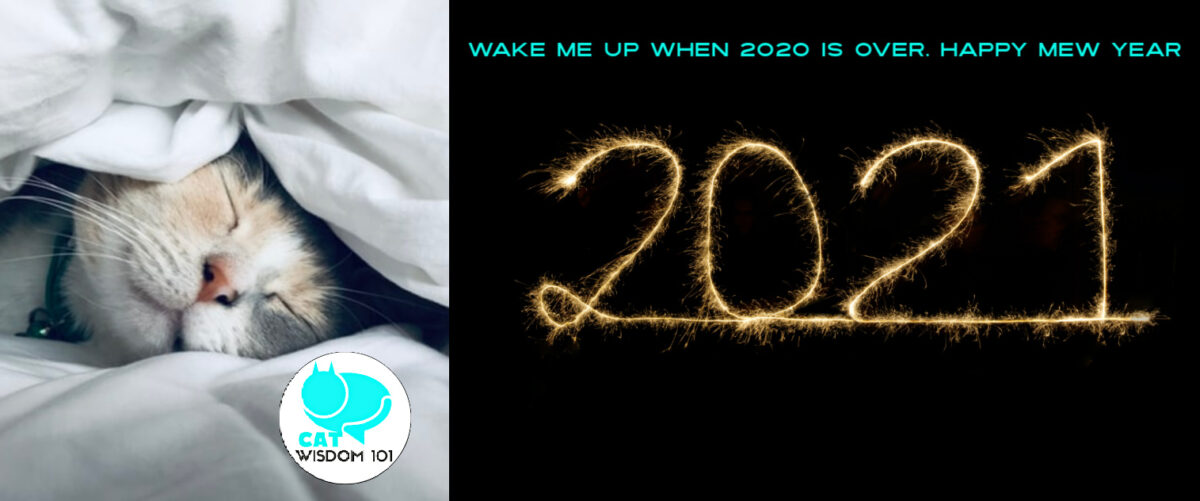 new year 2021 cat