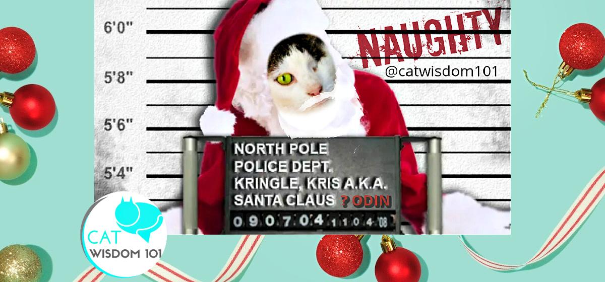 naughty santa cat
