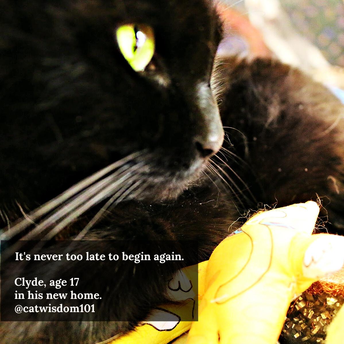 clyde cat second chances