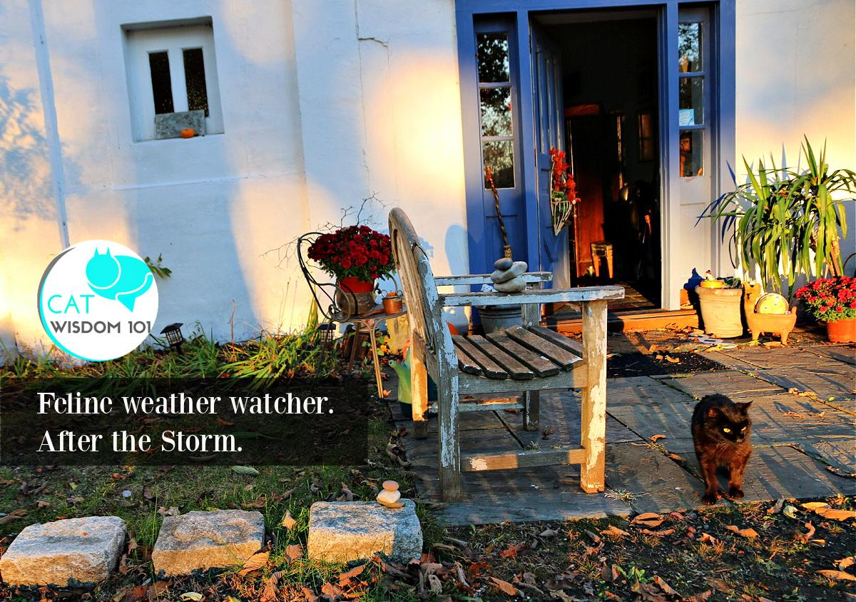 kitty weather watcher