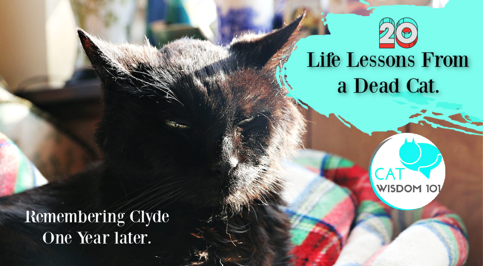 clyde-life lessons from a dead cat