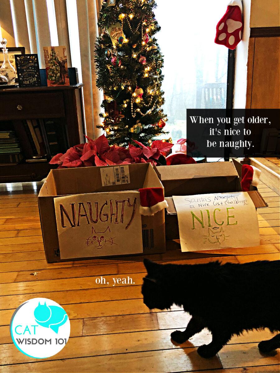 naughty nice christmas cat