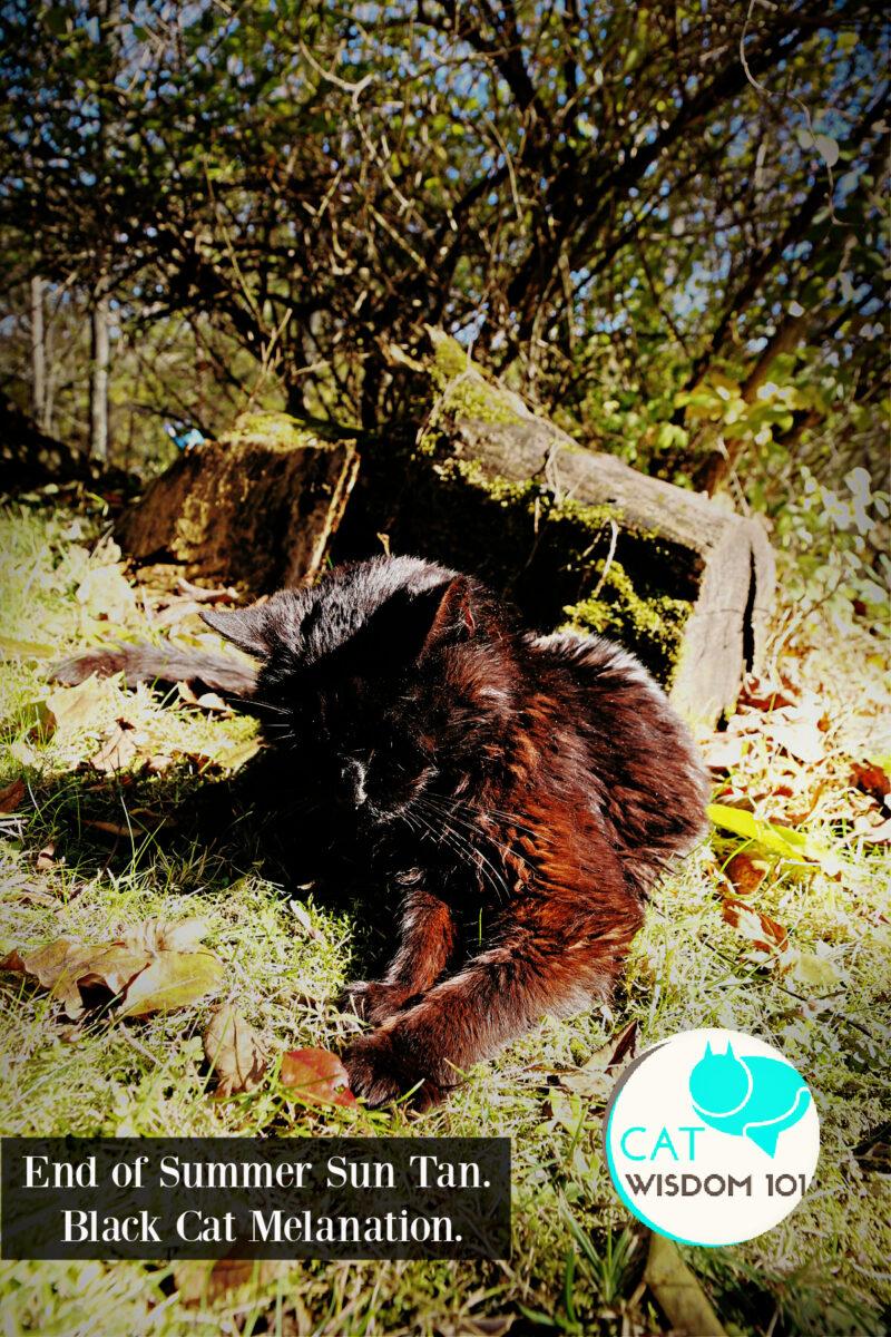 autumn black cat sun tan