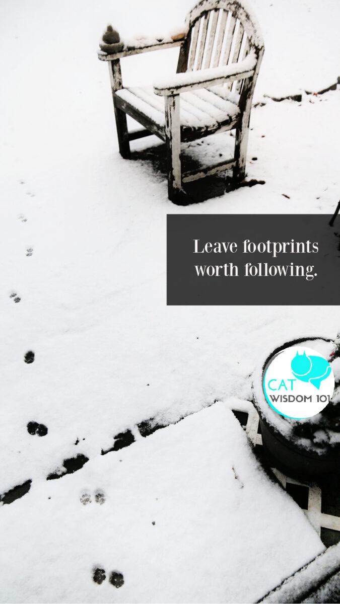 footprints pawprints in snow