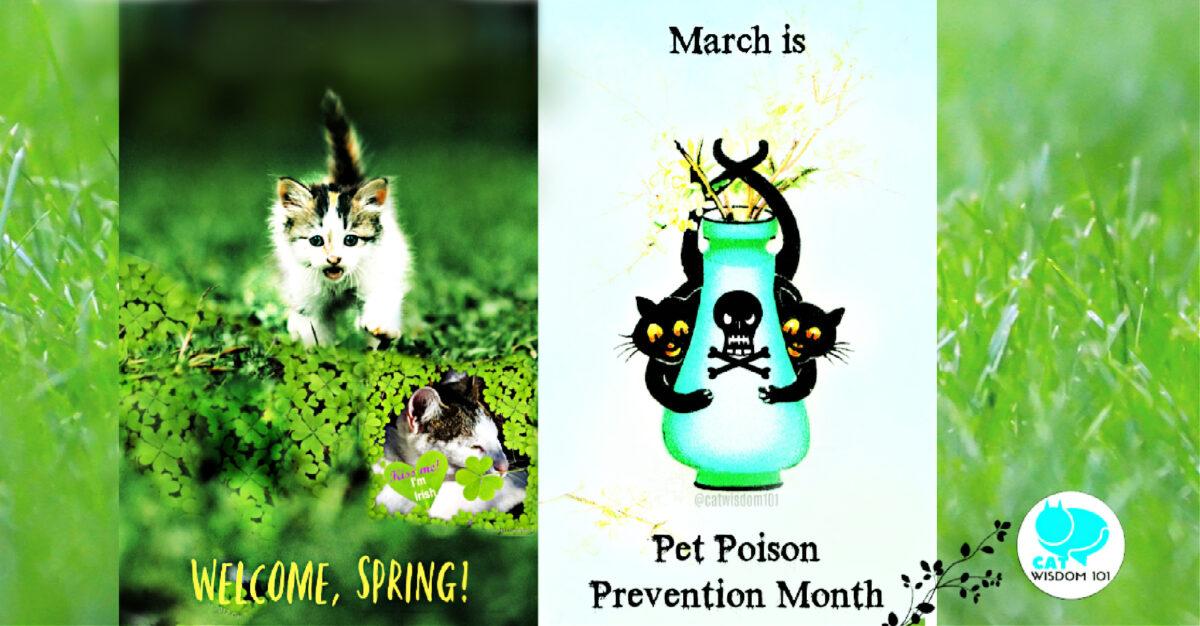 pet poison awareness month