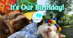 odin cat birthday hat